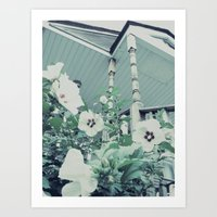 Rose Of Sharon ~ Flower … Art Print
