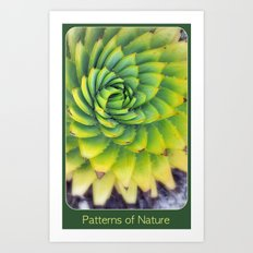 Patterns of Nature - succulent I Art Print