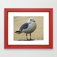 Gull Framed Art Print