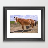 New Forest Ponies Framed Art Print