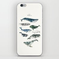 Whales iPhone & iPod Skin