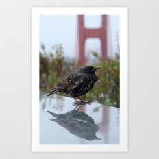 Glamourous bird at Golden Gate Bridge, San Francisco Art Print