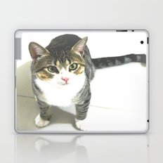 Miojo Cat. Laptop & iPad Skin