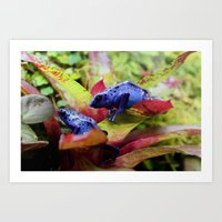 Blue Poison Dart Frogs (… Art Print