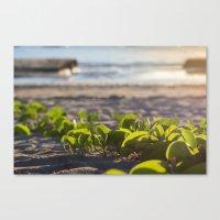 Follow Me To The Sea Canvas Print