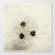 Three Weeds Canvas Print