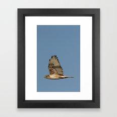Ferrougenous Hawk Framed Art Print