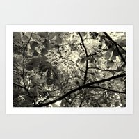 Monochrome Leaf's  Art Print