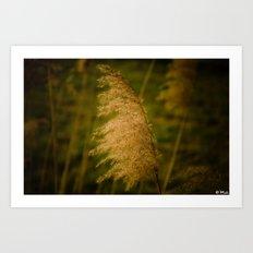 Reed Art Print