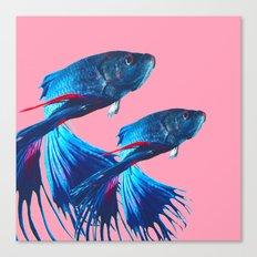 Betta fish Canvas Print