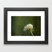 Closed Queen Anne's Lace Framed Art Print