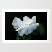 White as spring Art Print