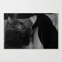 Love between cat and penguin  Canvas Print