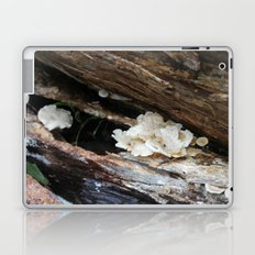 Where The Fairies Live Laptop & iPad Skin