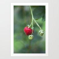 Red Ripe Strawberry Art Print