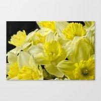 Simply Daffodils Canvas Print