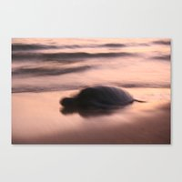 Soft Turtle Canvas Print
