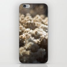 Winter's Asters iPhone & iPod Skin