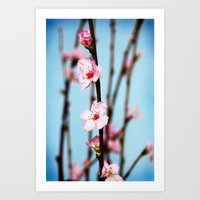 Pretty Pink Peach Petals Art Print
