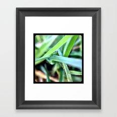 Grass. Framed Art Print