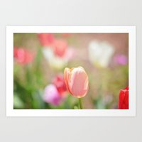 Tulips In The Garden Art Print