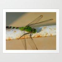 Dragonfly 2011 Art Print