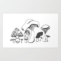Vintage style Mushroom Grouping  drawing Art Print