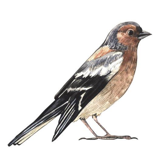 Watercolor nightingale Art Print