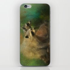 Raccoons Waiting for Nighfall iPhone & iPod Skin