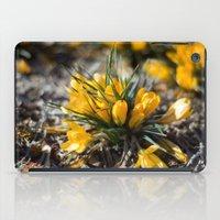 Sunlit Crocus iPad Case