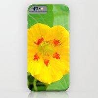 Yellow Nasturtium iPhone 6 Slim Case