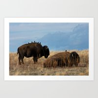 Bird on Buffalo Art Print