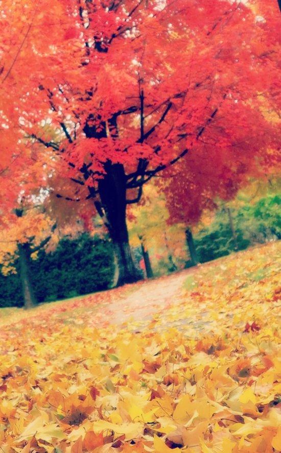 Fall stroll  Art Print