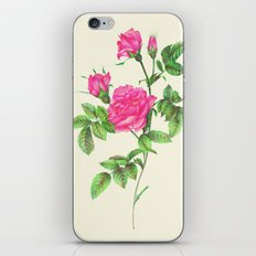 Ballpoint Pen, Redouté's Roses iPhone & iPod Skin
