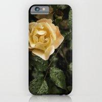 iPhone & iPod Case featuring Rose 1 by David Bernard Williams II