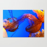 The Jellies Canvas Print