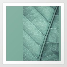 Sage Green Closeup Leaf Art Print