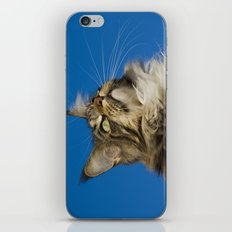 MAINE COON CAT iPhone & iPod Skin