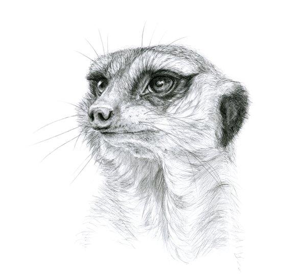Meerkat G035 Art Print