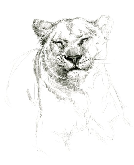 Lioness emotions SK046 Art Print