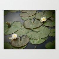 Kenilworth Lotus Canvas Print