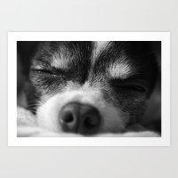 Rufio Sleeping Art Print