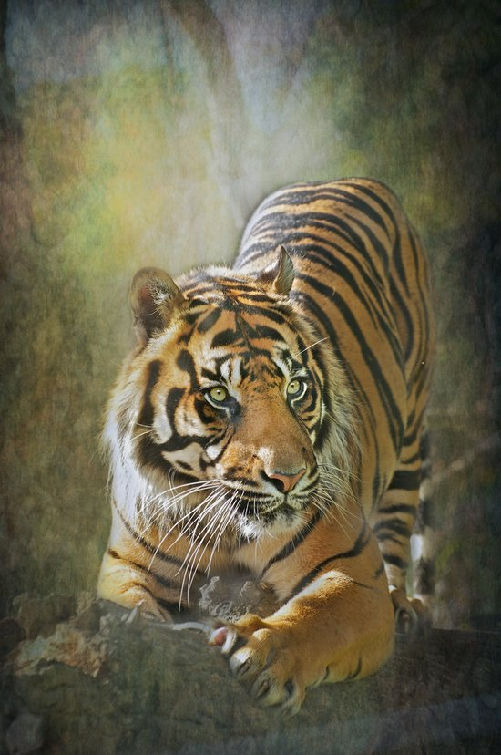 Magnificent!!! Art Print