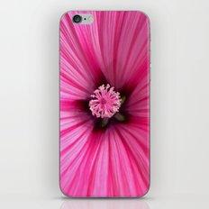 pink mallow II iPhone & iPod Skin