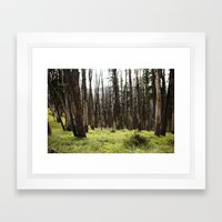 YELLOWSTONE FOREST Framed Art Print