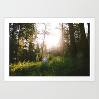 morning in the woods Art Print