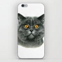 British shorthair cat  G120 iPhone & iPod Skin