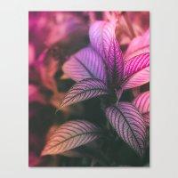 Violet Ladder Canvas Print
