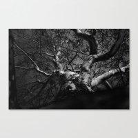 Tree B&W Canvas Print