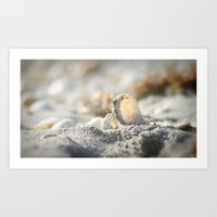 A Shell Art Print